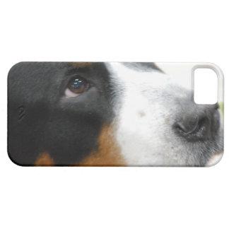 Mayor perro suizo dulce de la montaña iPhone 5 Case-Mate protector