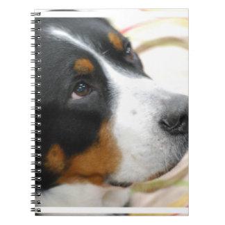 Mayor perro suizo dulce de la montaña libros de apuntes