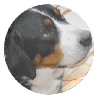 Mayor placa suiza del perro de la montaña plato