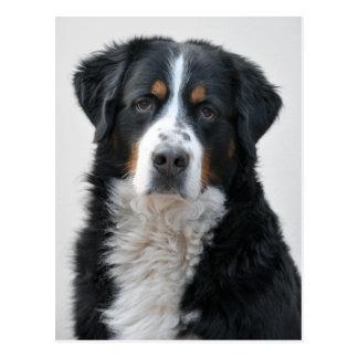 Mayor postal suiza de la foto del perro de la