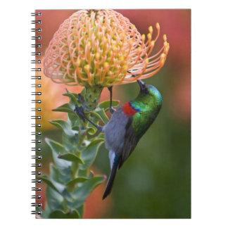 Mayores alimentaciones Doble-agarradas de Sunbird  Note Book