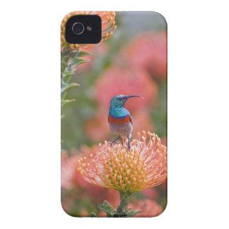 Mayores alimentaciones Doble-agarradas de Sunbird  iPhone 4 Case-Mate Coberturas