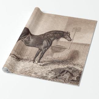 Mazorca Caballo de alquiler de Norfolk del caballo Papel De Regalo