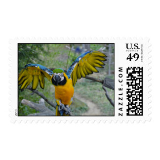 McCaw Postage Stamps