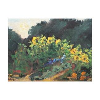 McClellan Ranch Sunflowers Canvas Print
