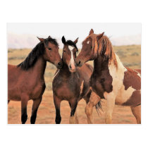 McCullough Peaks Wild Horses Postcard