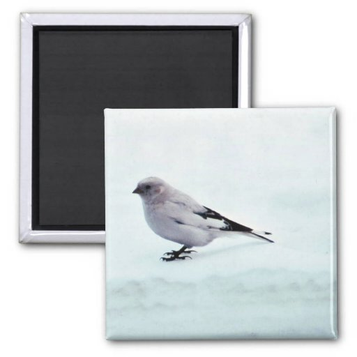 McKay's Bunting 2 Inch Square Magnet