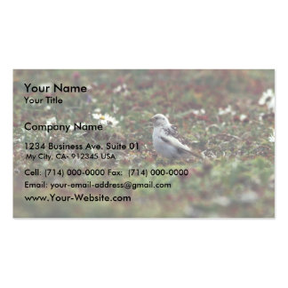 McKays Bunting (breeding plumage) on Hall Island Business Card Templates