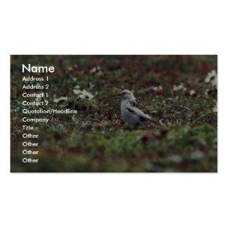 McKays Bunting (breeding plumage) on Hall Island Business Card Template