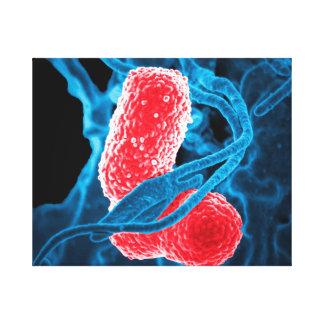 (MDR) Klebsiella pneumoniae abstract art biology Canvas Print