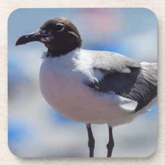 Me A Seagull Drink Coaster