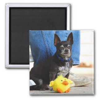 Me And My Duck Chihuahua Magnet
