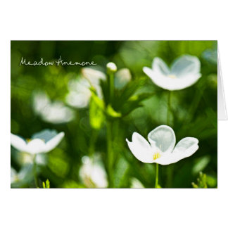 Meadow Anemone Card
