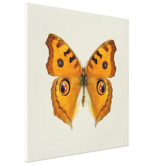 Meadow Argus Butterfly Canvas Print