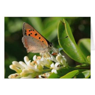 Meadow Brown Card