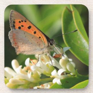 Meadow Brown Coaster