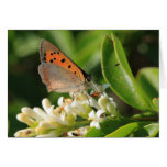 Meadow Brown Stationery Note Card