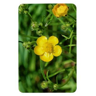 Meadow Buttercup Rectangular Photo Magnet