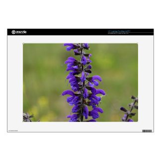 Meadow clary or meadow sage decal for laptop