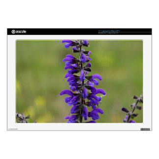 Meadow clary or meadow sage laptop decal