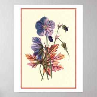 """Meadow Cranesbill"" Botanical Illustration Poster"