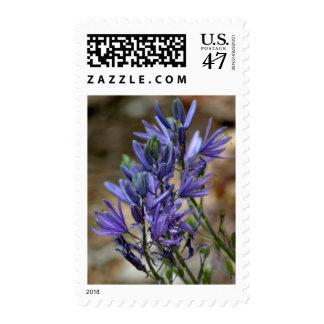 Meadow Hyacinth Postage Stamp