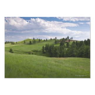 Meadow in Custer State Park Card