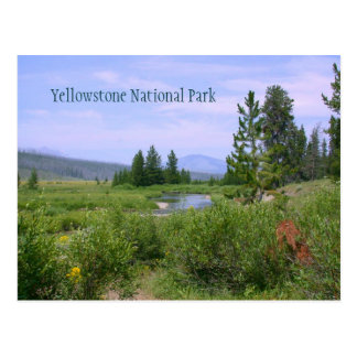 Meadow in Yellowstone Postcards