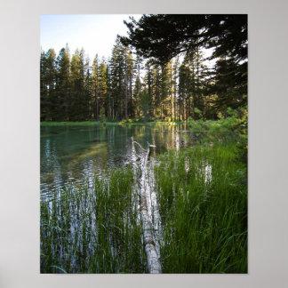 Meadow Lake, Fallen Log Poster