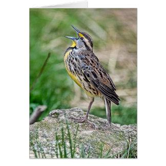 Meadow Lark Greeting Card