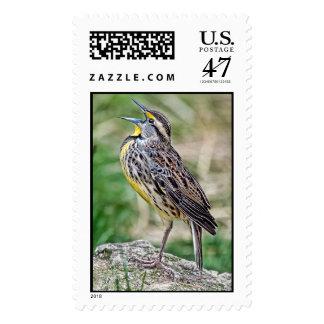 Meadow Lark Singing Postage Stamp