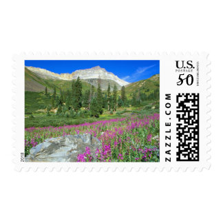 Meadow of fireweed and Mt. Sneffels in Mt. Postage