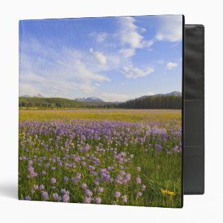 Meadow of penstemon wildflowers in the 2 binders