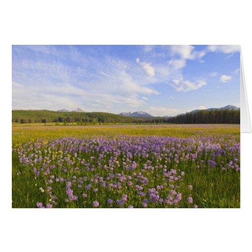 Meadow of penstemon wildflowers in the 2 greeting card