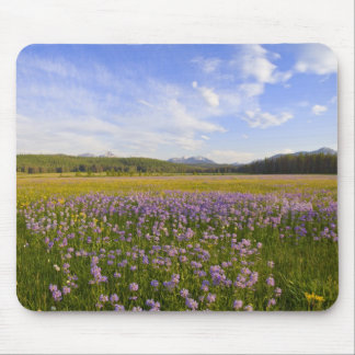 Meadow of penstemon wildflowers in the 2 mouse pad