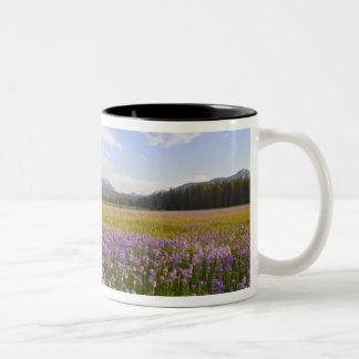 Meadow of penstemon wildflowers in the 2 mugs