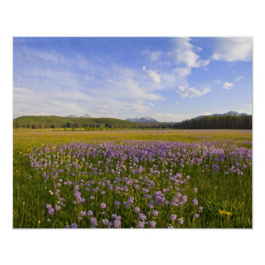 Meadow of penstemon wildflowers in the 2 poster