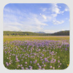 Meadow of penstemon wildflowers in the 2 square sticker