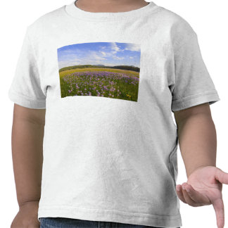 Meadow of penstemon wildflowers in the 2 shirts