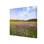 Meadow of penstemon wildflowers in the stretched canvas prints