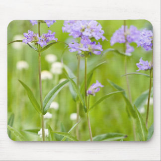 Meadow of penstemon wildflowers in the mouse pad