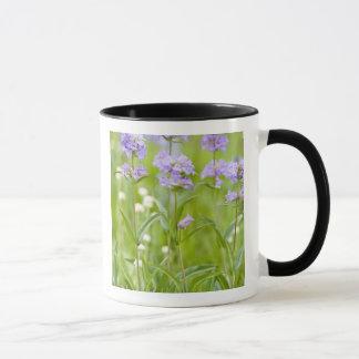 Meadow of penstemon wildflowers in the mug
