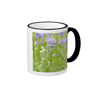 Meadow of penstemon wildflowers in the mugs
