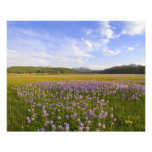 Meadow of penstemon wildflowers in the photo print
