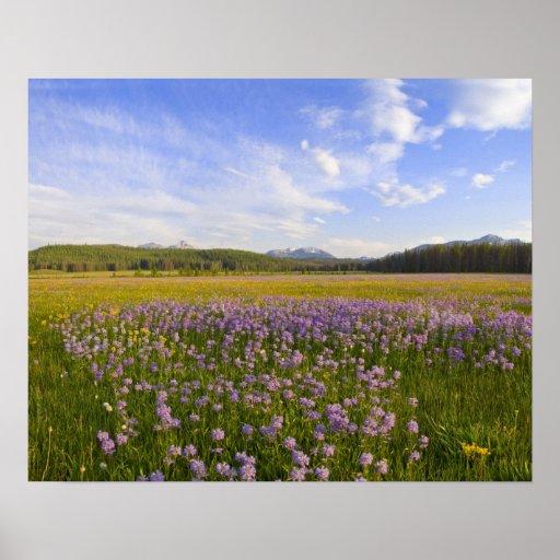 Meadow of penstemon wildflowers in the print