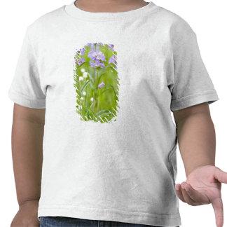Meadow of penstemon wildflowers in the tshirt