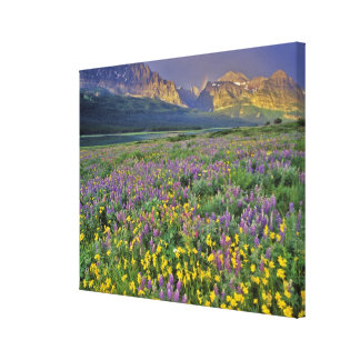 Meadow of wildflowers in the Many glacier Canvas Print