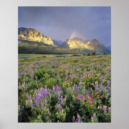 Meadow of Wildflowersnear Lake Sherbourne in Poster