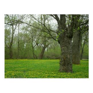 Meadow Park Postcard