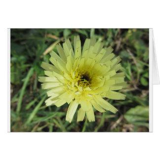 Meadow salsify flower card